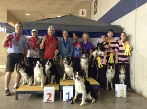 Dog Agility Masters Team Tournament